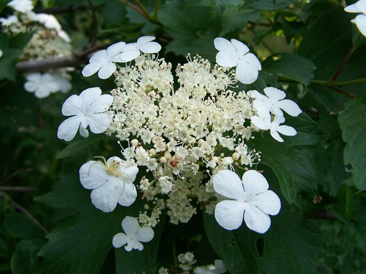 Gradina botanica iasi sectia plante utile for Plante utile